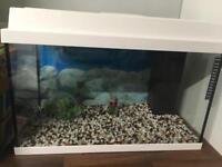 Juwel 60 aquarium