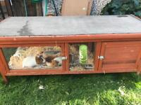 2 Guinea pigs and hutch NOW SOLD