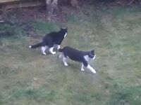 Two 6 month old kittens