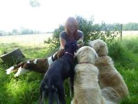 Established Reliable Dog Walker (High Barnet/Hadley Wood/Potters Bar) 11 years experience