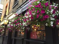 Full time bar staff required - West end family owned pub