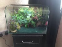 leopard gecko and tank plus all equipment