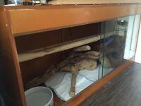 Huge 5 ft vivarium, with wooden rub/ hide, 2 thermostats