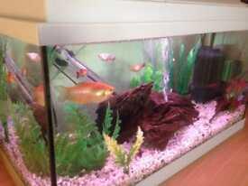 Fish tank full set up 70L