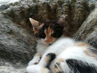 8 Unique Kittens For Sale