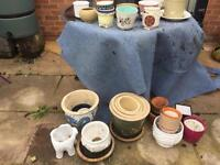 Plant pots for collection