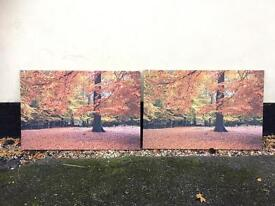Autumnal woodland canvas pictures x2