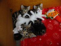 Kittens ready in 4 weeks