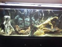 120 gallon tank and stand