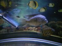 10 TROPICAL FISH S/ M / L ALL IN GOOD HEALTH QUICK SALE £105
