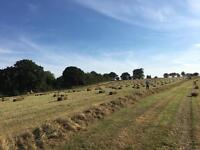Hay small bales - the best quality organic