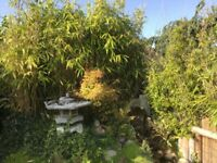Instant bamboo hedge