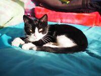 missing kitten on hampstead heath