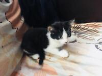 3 kittens BUY 2 GET ONE FREE