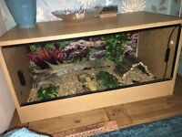 Leopard Gecko and 2.5 ft tank with Accessories
