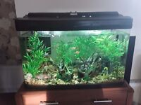 120Litre Tropical fish tank with £100 of tropical fish and all ACCESSORIES