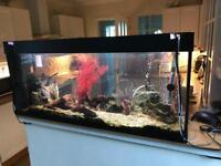 220l Juwel aquarium