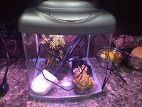 35 litre fish tanks