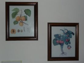 Prints of Fruits, Reproduction c1824, Framed/Glazed REDUCED!!
