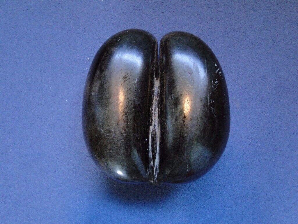Antique Coco de Mer Nut