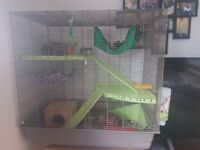 2 pet rats with large cage and accessories