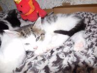 Cute kittens, born 15th Sept 2017