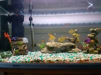 850 Aquarium Fish Tank + Cabinet, complete set with pump lights ornaments heater fish.