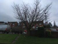 Gascoigne Garden & Tree Services