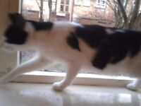 black and white cat 11 mths old