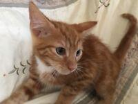 Take me home! 4 adorable kittens, 3 boys 1 girl