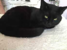 BLACK CAT estimated 8 YEARS OLD TO GIVE AWAY -
