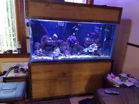 5ft aquarium