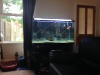 4ft complete fish tank set up