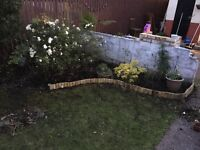 Grass cutting, gardens redesigned , plants available