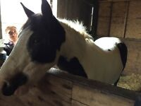 PONIES FOR LOAN / PART-SHARE