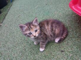 Two kitten for sale