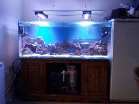 500 litre marine aquarium complete set up