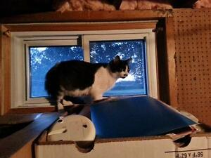 Still Missing Black & White Female Cat from Tracey St. Belleville Belleville Area image 3