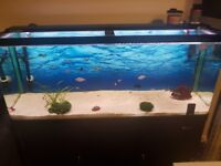 Tropical fish tank 250l