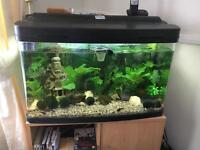 Fish tank complete SOLD