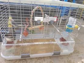 Bird Cage and Cockatiel Birds x2