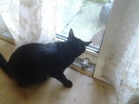 Beautiful little female cat in need of a new home. Magic is pure black in colour.
