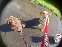 Dog Walking: Walkies with Nick