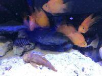 Tropical fishes American parrot jack damsel clown loch African fish Tank aquarium cheap Leicester