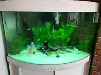 Jewel 190l corner tank