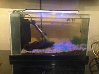 Fluval spec fish tank
