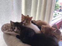 (URGENT) Kittens for sale