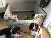 Gorgeous Springer Spaniel pups for sale