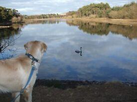 Galadene Dog Walking Edinburgh- A Professional Dog Walker in South West Edinburgh