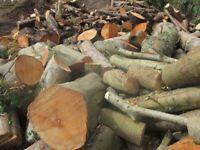 Unprocessed hardwood logs/firewood